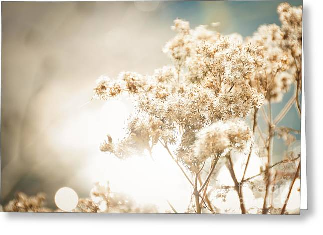 Greeting Card featuring the photograph Sparkly Weeds by Cheryl Baxter