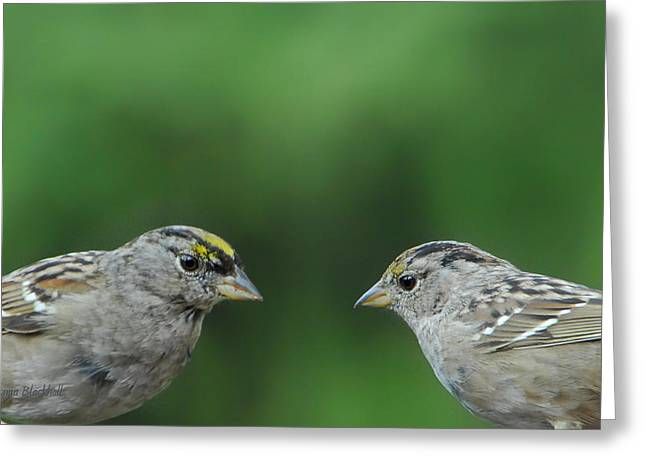 Sparrow Love Greeting Card by Donna Blackhall