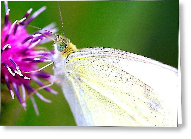 Speckled Wings Greeting Card by Heather  Boyd