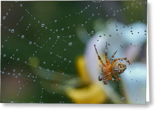 Spider Greeting Card by Jean Noren