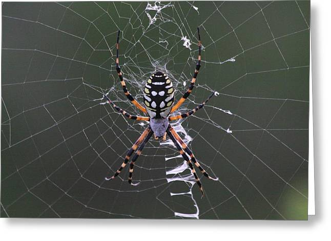 Spider Greeting Card by Jeanne Andrews