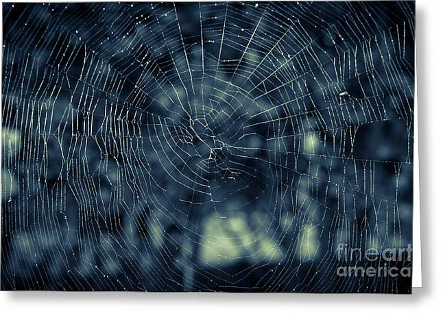 Greeting Card featuring the photograph Spider Web by Matt Malloy