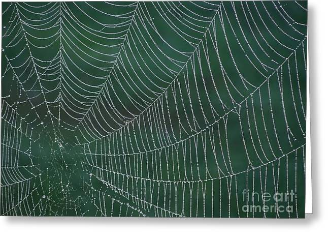 Spider Web With Dew Drops Greeting Card by Chad and Stacey Hall