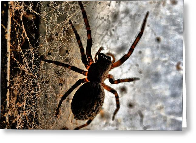 Spiders Home Greeting Card