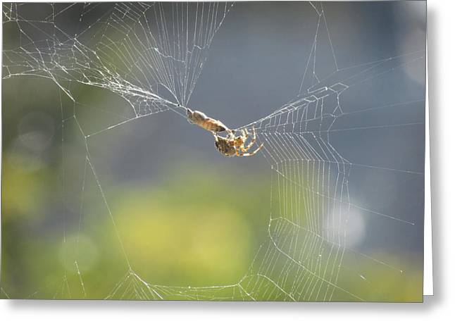 Greeting Card featuring the photograph Spider's Pantry by Bonnie Muir