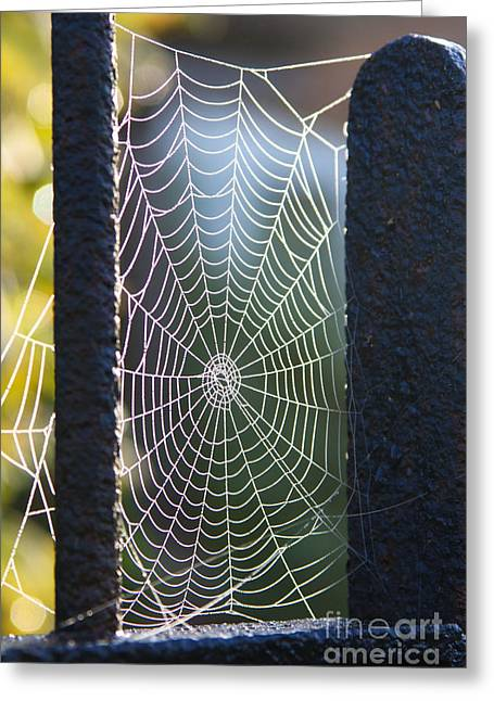 Spider's Web Greeting Card by Jo