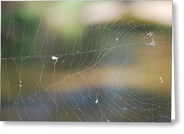 Spiderweb Greeting Card by Michele Carter