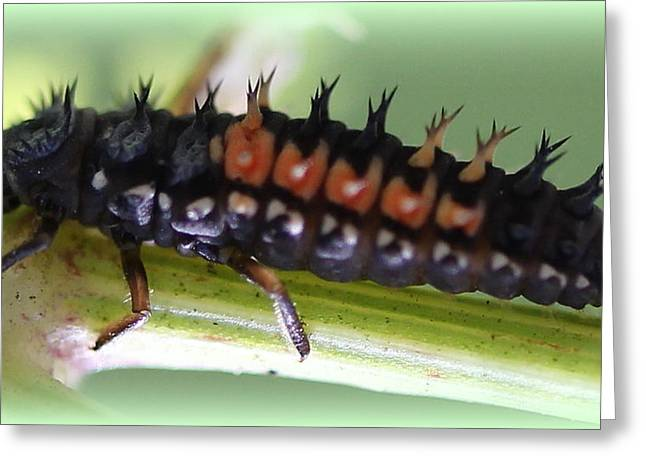 Spiky Caterpillar  Greeting Card by Maureen  McDonald
