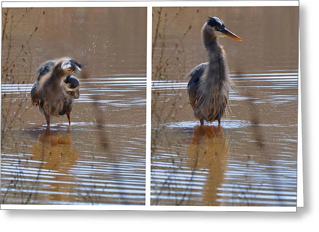 Spin And Fluff Dry Heron - C3219d Greeting Card by Paul Lyndon Phillips