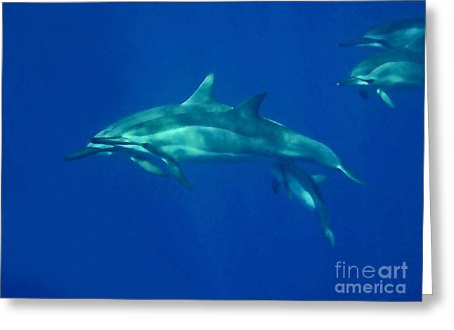 Greeting Card featuring the photograph Spinner Dolphins by Bette Phelan