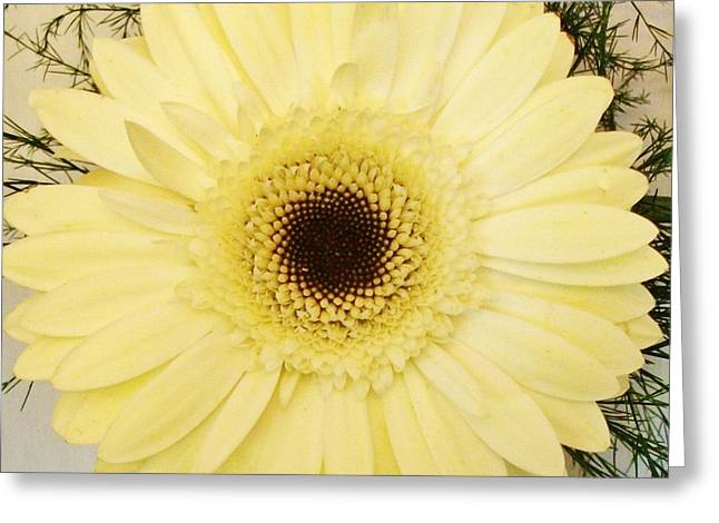 Spiral Gerber Daisy Greeting Card by Marsha Heiken