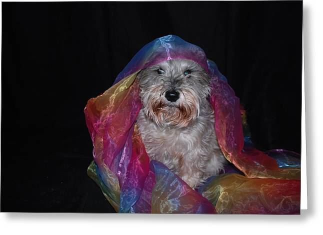 Spirit In Color Greeting Card by Gloria Warren
