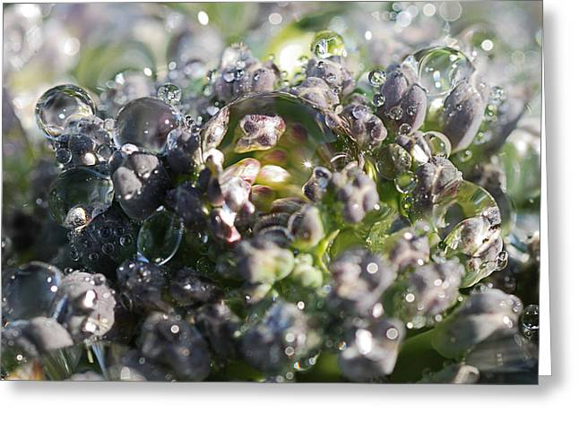 Spirit Of Broccoli Greeting Card by Susan Capuano