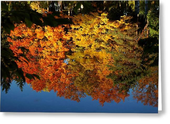 Splash Of Color Greeting Card by LeeAnn McLaneGoetz McLaneGoetzStudioLLCcom