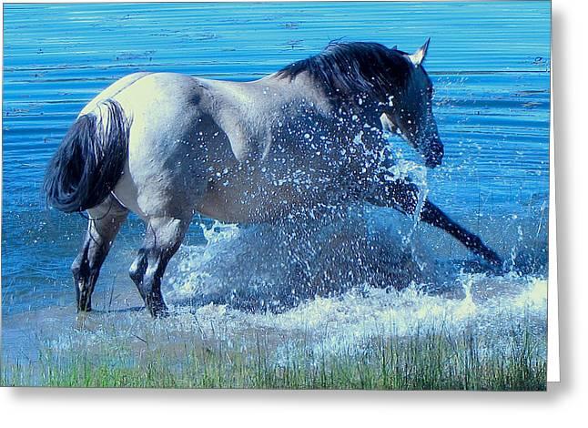 Splashing Horse Greeting Card by FeVa  Fotos