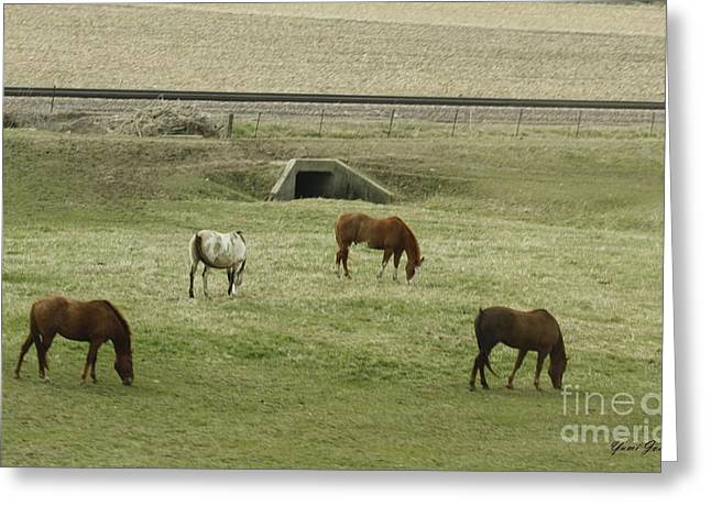 Greeting Card featuring the photograph Splendor Of Horses by Yumi Johnson