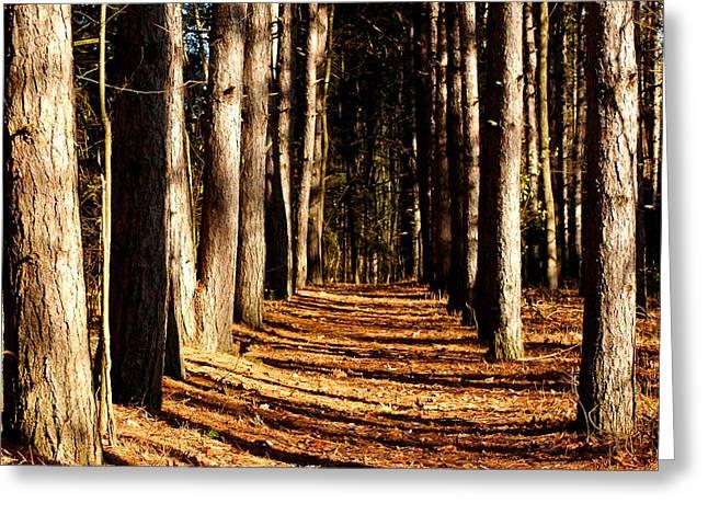 Spnc Tunnel Of Trees Greeting Card by LeeAnn McLaneGoetz McLaneGoetzStudioLLCcom