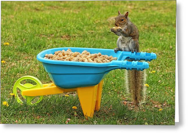 Spoiled Squirrel Greeting Card