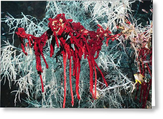 Sponge On Coral Greeting Card by Georgette Douwma