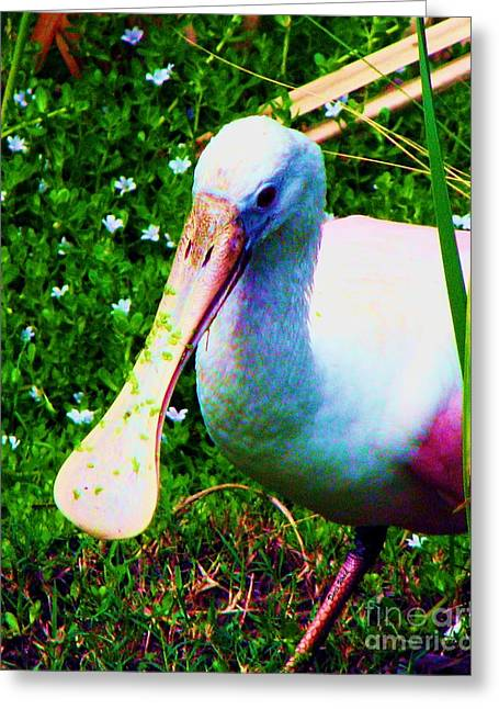 Spoonbill Number One Greeting Card by Doris Wood