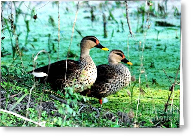 Greeting Card featuring the photograph Spot Bill Ducks by Pravine Chester