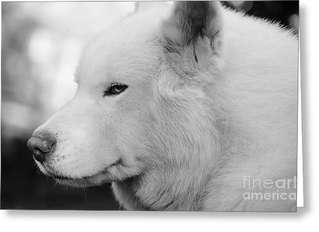 Spot In Black And White Greeting Card by Lynda Dawson-Youngclaus
