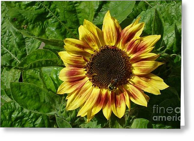 Greeting Card featuring the photograph Spot The Bee by Jim Sauchyn