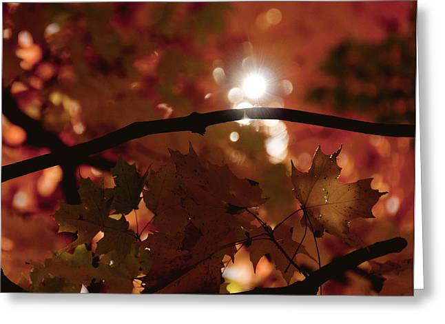 Greeting Card featuring the photograph Spotlight On Fall by Cheryl Baxter