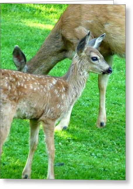 Spotted Fawn And Doe Greeting Card by Cindy Wright