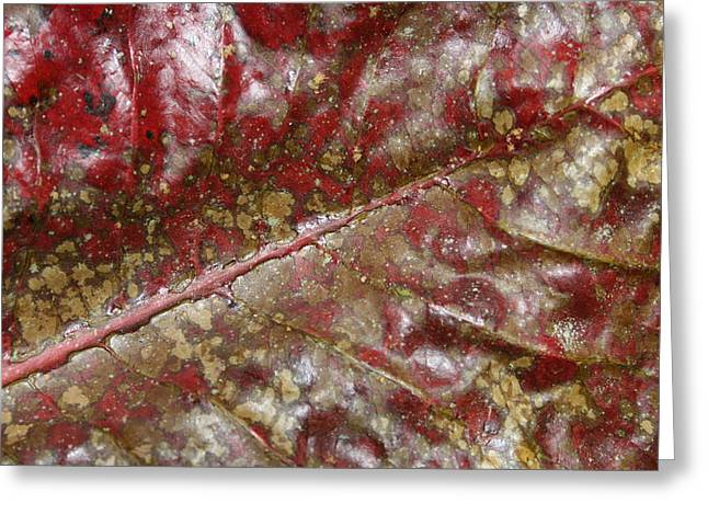 Spotted Red Leaf Greeting Card