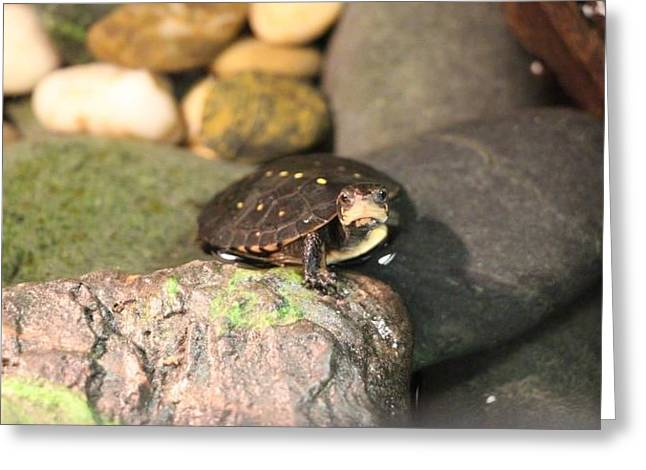 Spotted Turtle Greeting Card by Chad  Laba