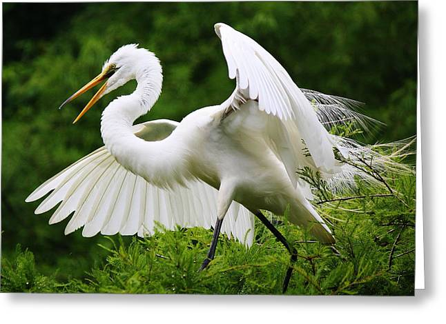Spreading His Wings Greeting Card by Paulette Thomas
