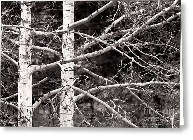 Spring Aspens Greeting Card by Clare VanderVeen