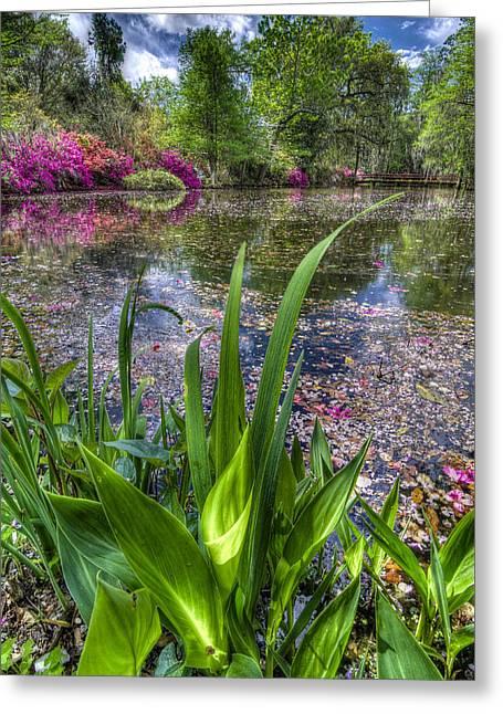 Spring At Magnolia Plantation - Charleston Sc Greeting Card by Drew Castelhano