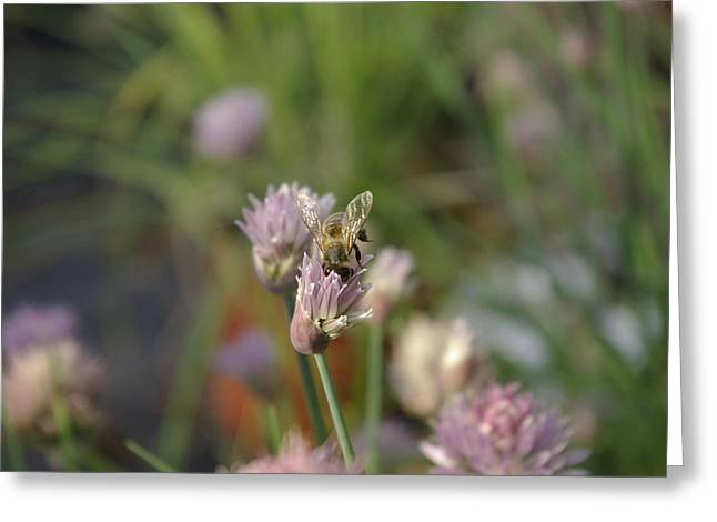 Greeting Card featuring the photograph Spring Bee by Serene Maisey