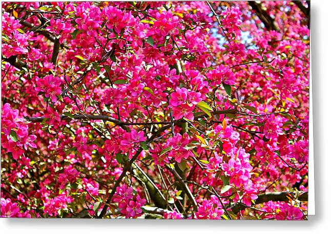 Spring Blossom Greeting Card by Felix Zapata