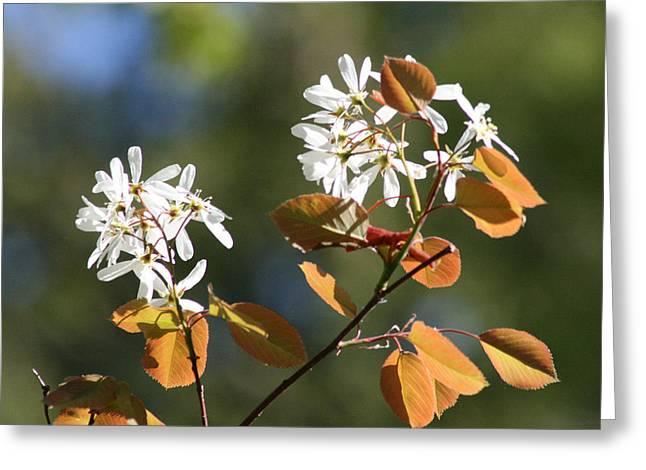 Spring Blossoming Shrubs Greeting Card