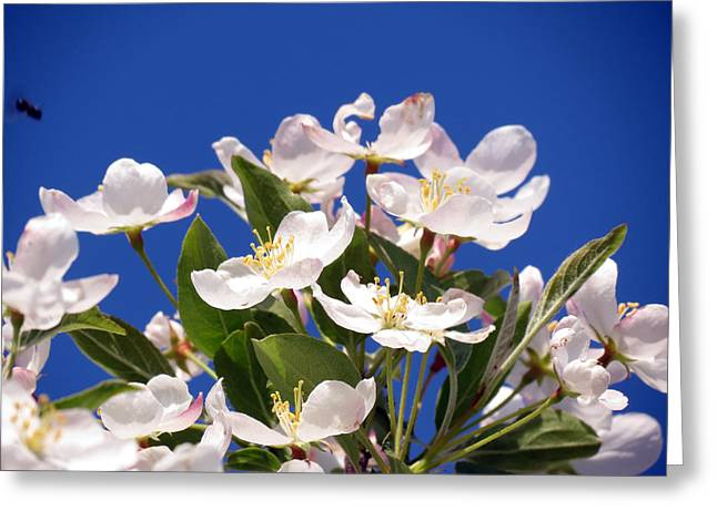 Greeting Card featuring the photograph Spring Blossoms by Darleen Stry