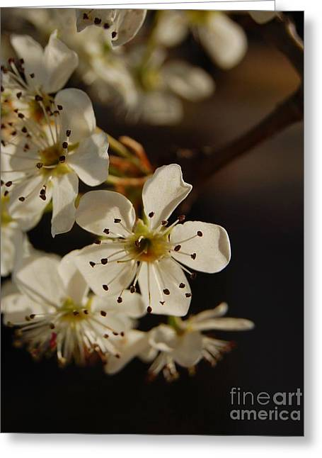 Spring Blossoms I Greeting Card
