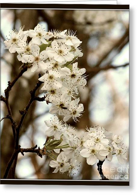 Spring Blossoms Greeting Card by Megan Wilson