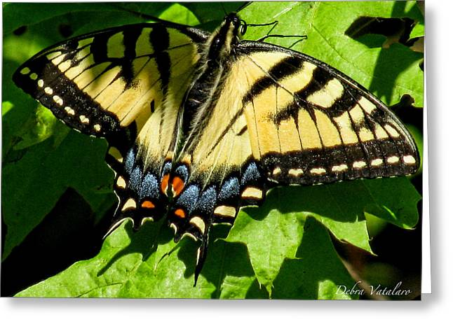 Spring Butterfly Greeting Card by Debra     Vatalaro