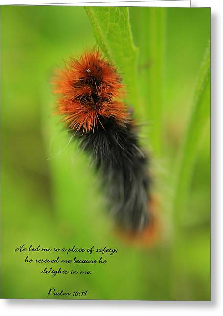 Spring Caterpillar Greeting Card