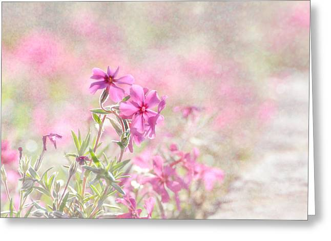 Spring Comes Gently Greeting Card by Tracey Tilson