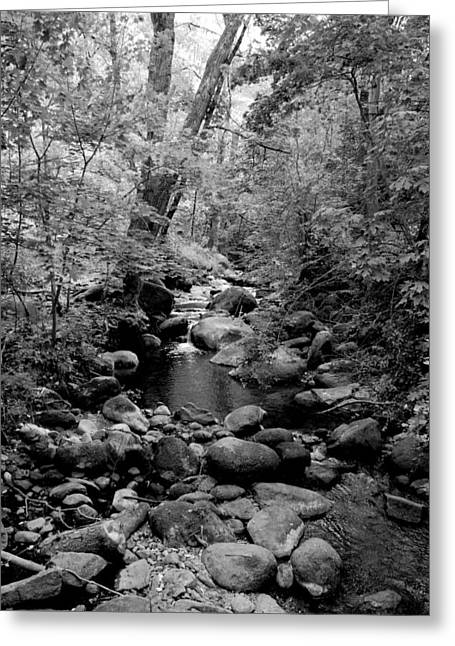 Spring Creek Greeting Card by Kathleen Grace