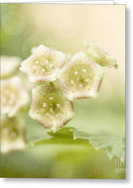 Spring Currant Blossom Greeting Card by Agnieszka Kubica