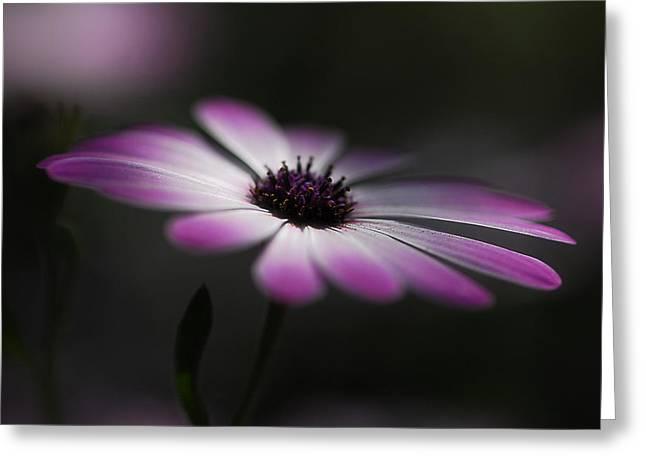 Spring Daisy Greeting Card by Saija  Lehtonen