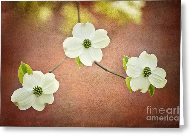 Spring Dogwood Blooms Greeting Card by Cheryl Davis