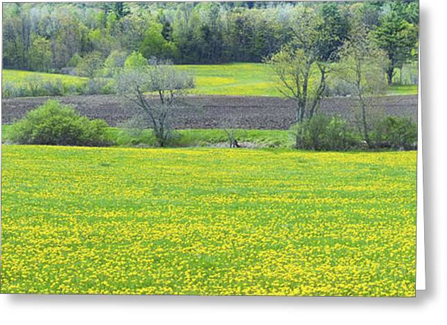Spring Farm Landscape With Dandelion Bloom In Maine Greeting Card