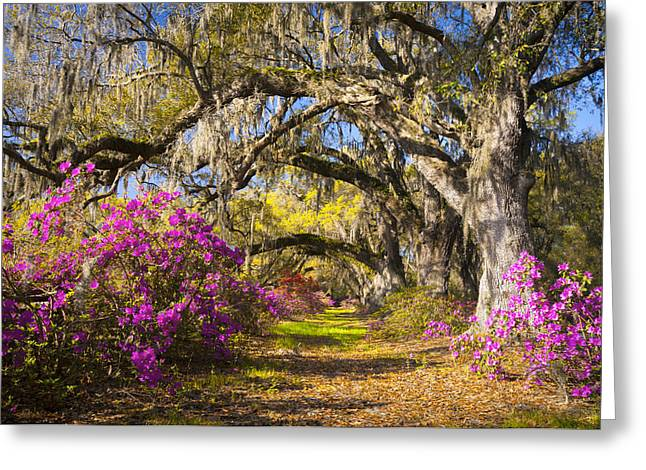 Spring Flowers Charleston Sc Azalea Blooms Deep South Landscape Photography Greeting Card by Dave Allen