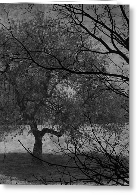 Spring For Leaves  Greeting Card by Jerry Cordeiro